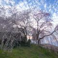 Photos: 身延のしだれ桜♪2