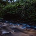犬鳴川のホタル♪3