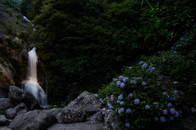 見帰りの滝と紫陽花とホタル♪