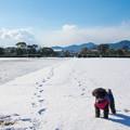写真: 雪の太宰府政庁跡♪