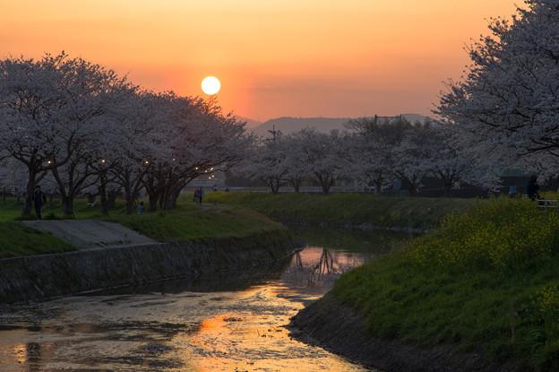 草場川の夕日♪