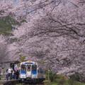 写真: 桜の駅♪