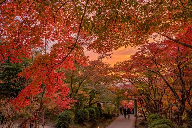 竈門神社の紅葉♪