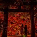 Photos: 竈門神社の紅葉♪