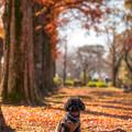 Photos: 福岡県小郡市城山公園♪