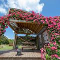 Photos: 海の中道海浜公園♪