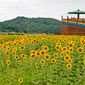 Photos: 道の駅おうとうの向日葵畑♪