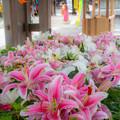 Photos: 宮地嶽神社♪