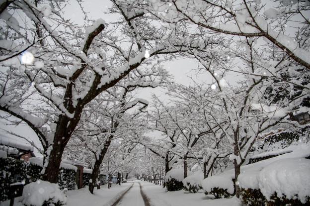 雪景色の秋月♪