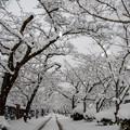 Photos: 雪景色の秋月♪