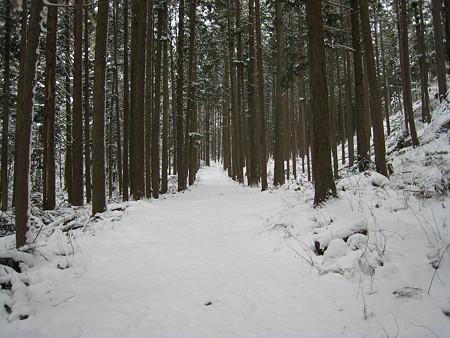 登山口までの杉林