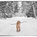 愛犬と散歩