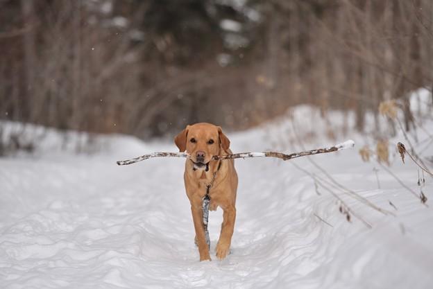 写真: 愛犬と散歩