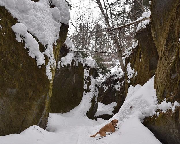 写真: 苔の回廊2