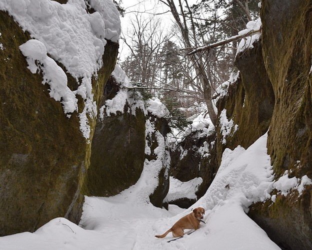 Photos: 苔の回廊2