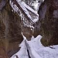 苔の回廊3