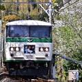 Photos: 桜の回廊