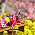 Photos: 撮り鉄合間のオフショット