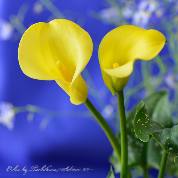 Photos: カラー