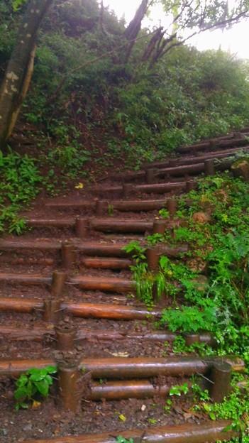 最後の丸太の階段