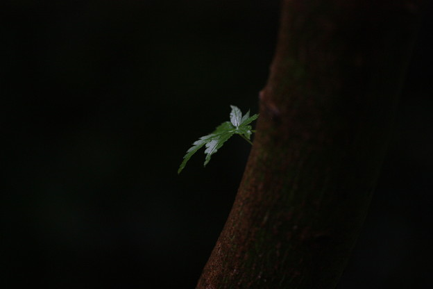 Photos: 新緑ひとえ