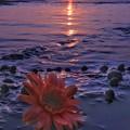 写真: 花のポトレ