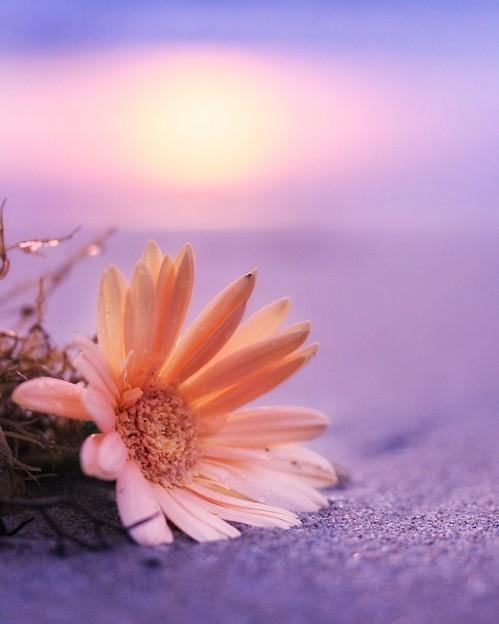 花のポトレ2