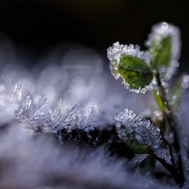 Photos: 初霜の日に・・