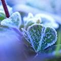 凍えるハート