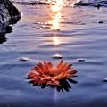 写真: 夕日とゆらり