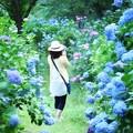 Photos: 紫陽花に包まれて