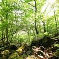 Photos: 初夏の九重山