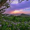 Photos: 紫陽花の頃・・