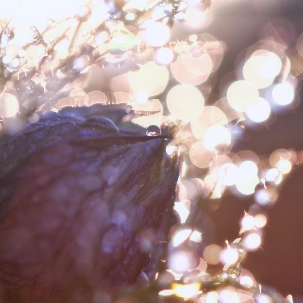 Photos: 逆光好き♪
