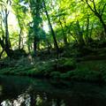 Photos: 九重山の恵み