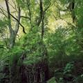 森が生まれる