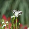 Photos: 花に夢中撮影に夢中