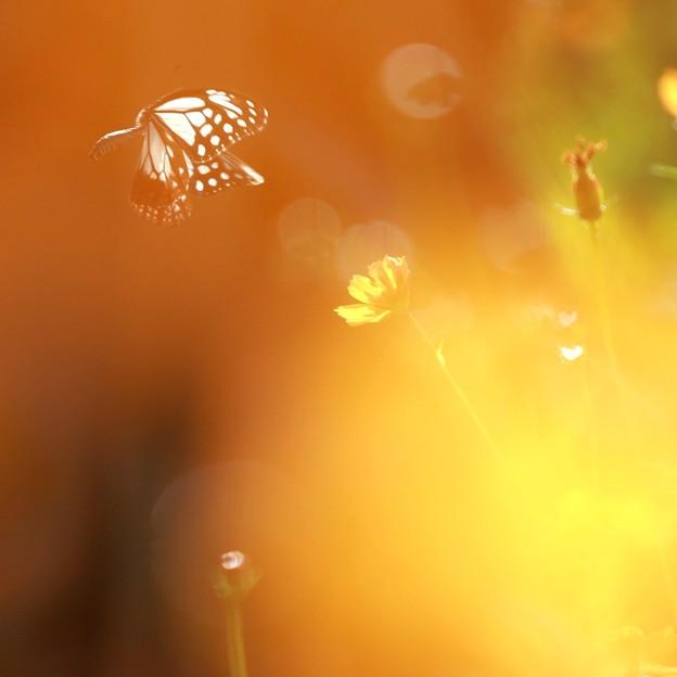 Photos: 秋風に舞う