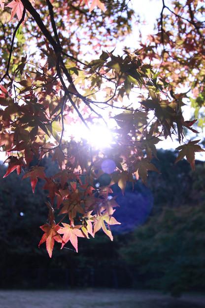 ぼちぼち秋の足音