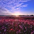 Photos: 2020秋桜