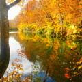 写真: 「錦秋の鎌池」