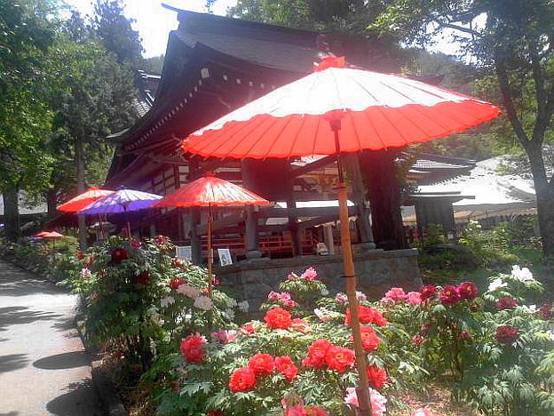 「牡丹寺と和傘」