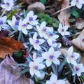 Photos: 「春を告げる花」