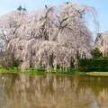 Photos: 「山国にも春が来た」
