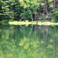 「静寂の御射鹿池」