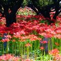 Photos: 「彼岸花と石仏」