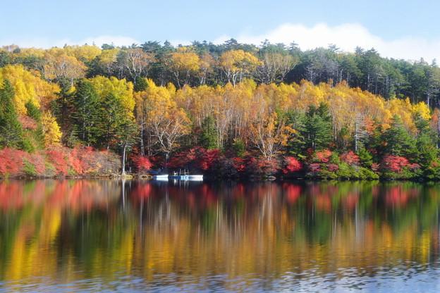 「白駒池、秋の装い」