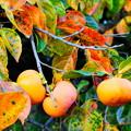 「柿の葉アート」