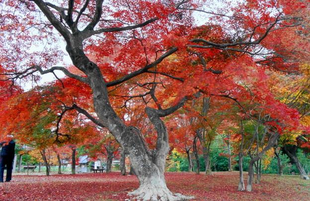 「紅葉の出早公園」