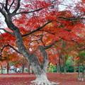 Photos: 「紅葉の出早公園」